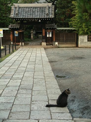 Nedu_cat