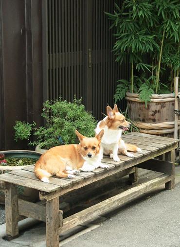 Nedu_dogs