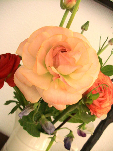 Spring_flower_1