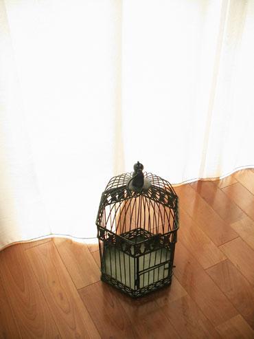 Birdcage_3
